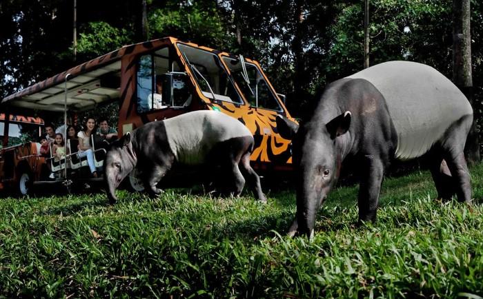Ночной зоопарк Сингапура